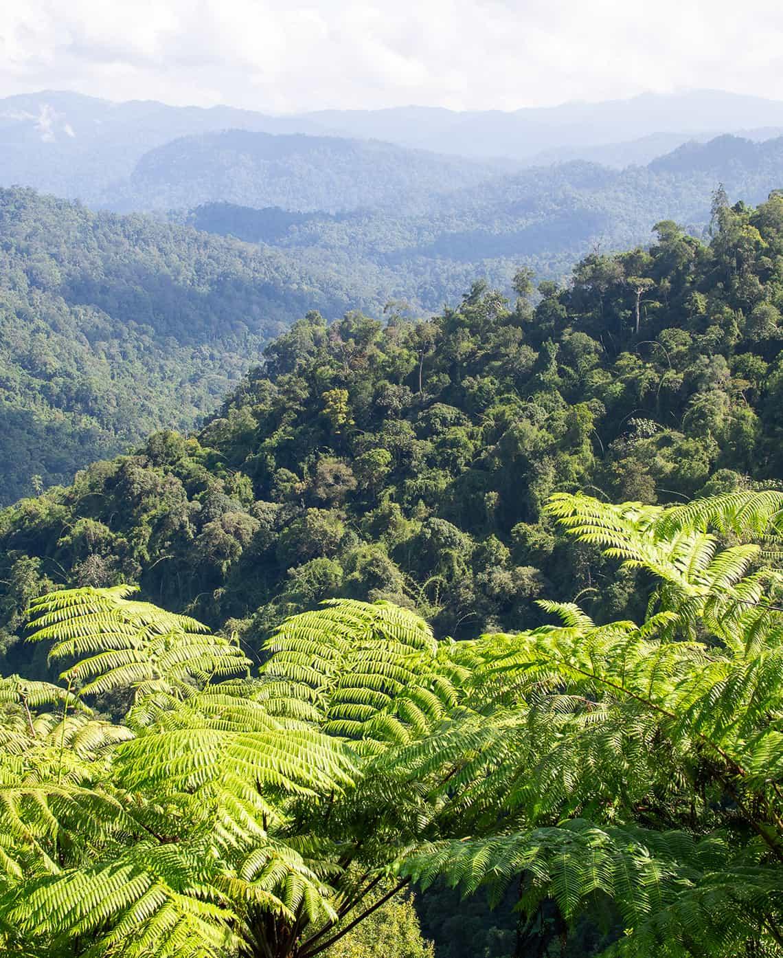 Jungles van Royal Belum